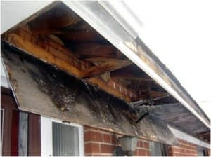 Damage From Gutters